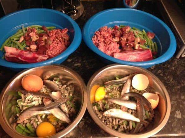 raw feeding diet for dog